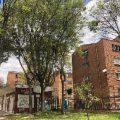 Así se Podan los Árboles en Bogotá