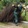 Entérate cómo prestamos el servicio de poda de árboles.